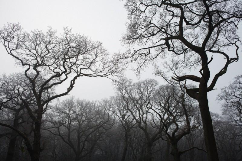 12.12.12 woods-8565