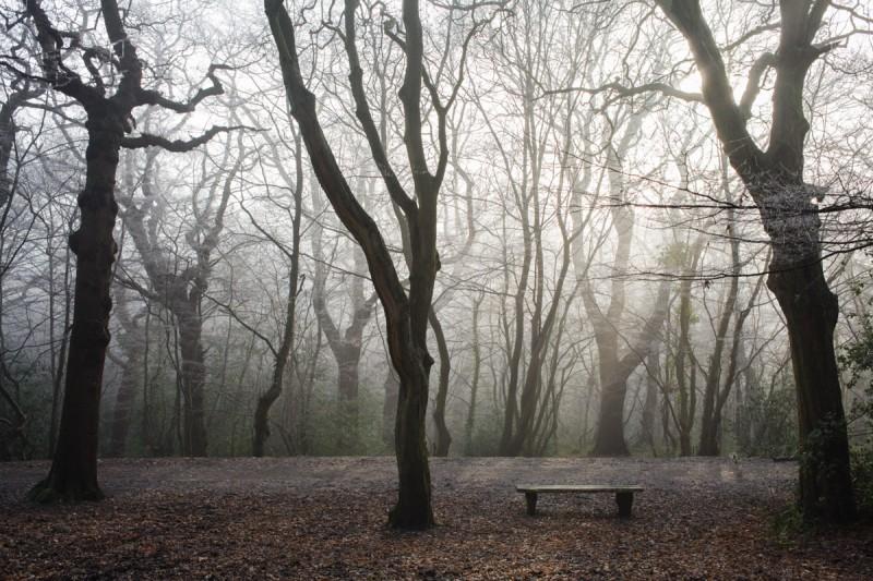 12.12.12 woods-8602