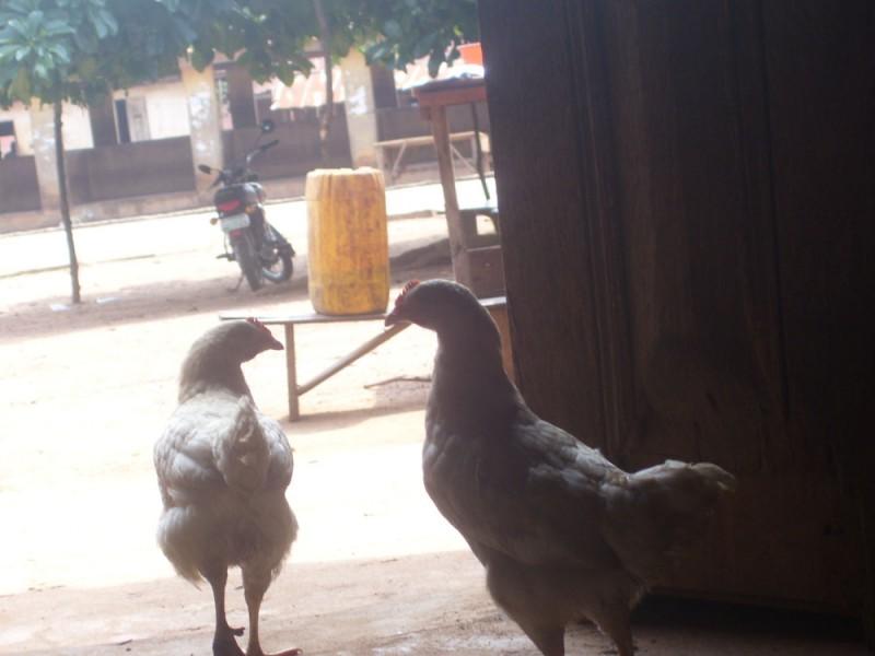 Animals2_Mathew Obagaye