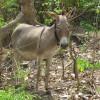 Animals3_Mercy Adekanye thumbnail