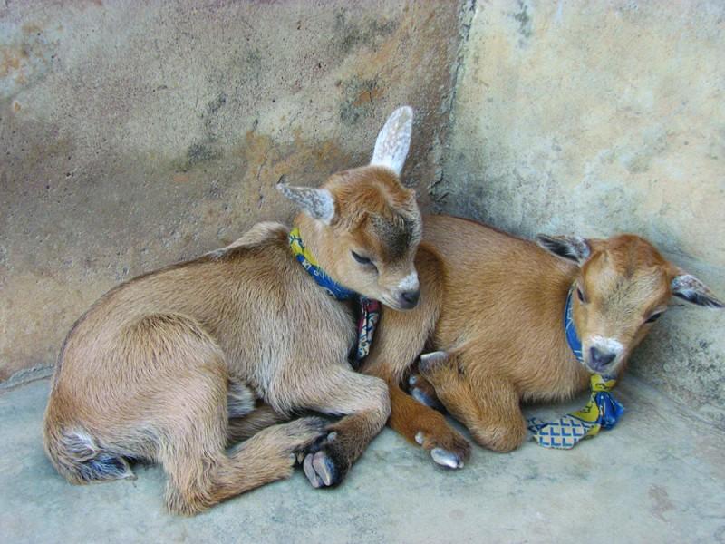 Animals6_Rasaki Ajape