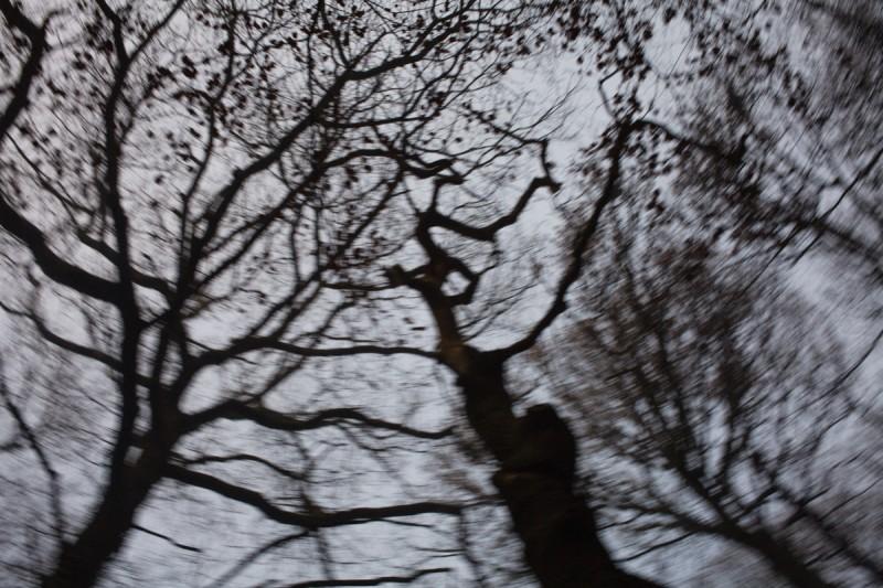 12.12.12 woods-8588
