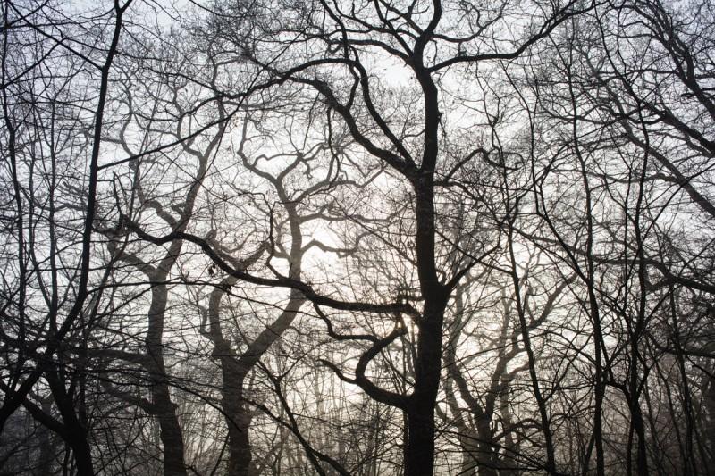 12.12.12 woods-8604